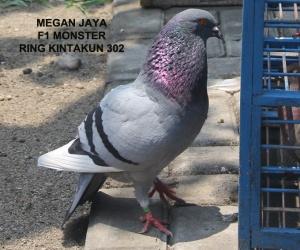 MEGAN JAYA 02
