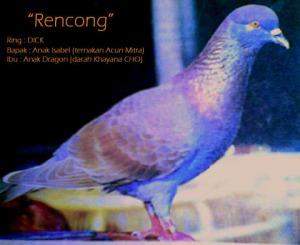 rencong
